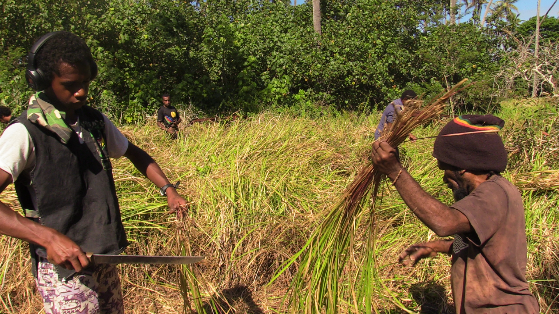 Community members cutting thatch for a new house.